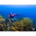 ทัวร์เกาะเต่า-นางยวน ทะเลชุมพร