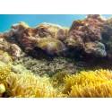 แพคเกจ 3 เกาะพม่า(เกาะหัวใจมรกต, เกาะฮอร์สชู, เกาะย่านเชือก)+เรนเดียร์บีช เกาะแมคคลอยด์ (เกาะมากุย) เกาะนูดี้ พร้อมที่พัก และรถรับ-ส่ง สนามบิน ( 4 วัน 3 คืน )