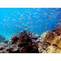 แพคเกจทัวร์ 4 เกาะหัวใจมรกต - เกาะฮอร์สชู - เกาะตาฟุ๊ก - เกาะย่านเชือก  2 วัน 1 คืน (พักที่เกาะฮอร์สชู) ( เรือออกจากระนอง)