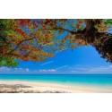 แพคเกจทัวร์เกาะสิมิลัน+อ่าวพังงา Speed Boat+เกาะรอก Speed Boat+พร้อมที่พัก(ภูเก็ต) และรถรับ-ส่ง สนามบิน ( 4 วัน 3 คืน )