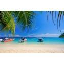 แพคเกจทัวร์เกาะไม้ท่อน Speed Boat +เกาะรอก Speed Boat+ชมการแสดงโลมา พร้อมที่พัก(ภูเก็ต) และรถรับ-ส่ง สนามบิน ( 3 วัน 2 คืน )